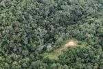 Logging road -- sabah_0659