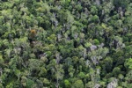 Borneo rainforest -- sabah_0660