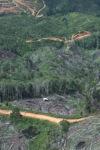 Deforestation in Borneo -- sabah_0673