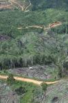 Deforestation in Borneo -- sabah_0674