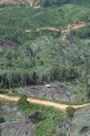 Deforestation in Borneo -- sabah_0675