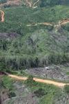 Deforestation in Borneo -- sabah_0676