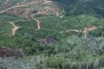 Deforestation in Borneo -- sabah_0678