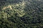 Logging road -- sabah_0685