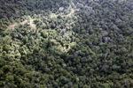 Logging road -- sabah_0686