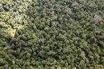 Logging road -- sabah_0688