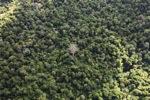 Borneo rainforest -- sabah_0692