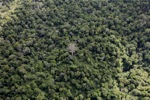 Borneo rainforest -- sabah_0695