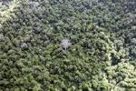 Borneo rainforest -- sabah_0696