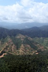 Deforestation for oil palm -- sabah_0700
