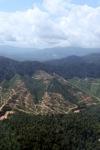 Deforestation for oil palm -- sabah_0700