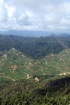 Deforestation for oil palm -- sabah_0703