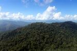Borneo rainforest -- sabah_0705