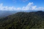 Borneo rainforest -- sabah_0706