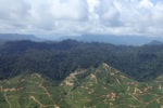 Deforestation for oil palm -- sabah_0707