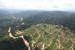Deforestation for oil palm -- sabah_0711