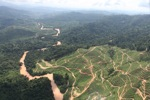 Deforestation for oil palm -- sabah_0713