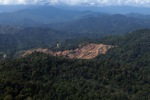 Deforestation for oil palm -- sabah_0722