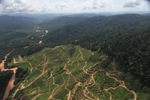 Deforestation for oil palm -- sabah_0723