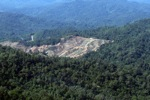 Deforestation for oil palm -- sabah_0724