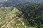 Deforestation for oil palm -- sabah_0728