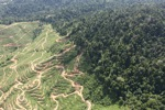Deforestation for oil palm -- sabah_0729