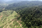 Deforestation for oil palm -- sabah_0731