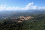 Deforestation for oil palm -- sabah_0733