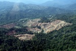 Deforestation for oil palm -- sabah_0735