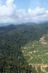 Deforestation for oil palm -- sabah_0738