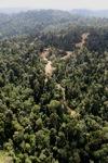 Logging road -- sabah_0740