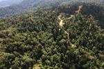 Logging road -- sabah_0742