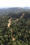 Logging road -- sabah_0747