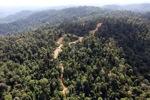 Logging road -- sabah_0749