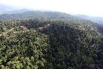 Logging road -- sabah_0750