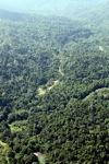 Logging road -- sabah_0751