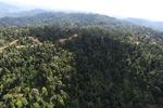 Logging road -- sabah_0752