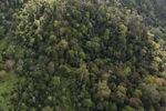Logged forest -- sabah_0753