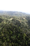 Logged forest -- sabah_0755