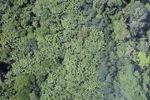 Borneo rainforest -- sabah_0756