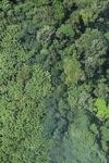Borneo rainforest -- sabah_0757