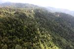Logged forest -- sabah_0758