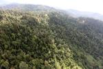 Logged forest -- sabah_0759