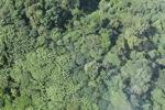 Borneo rainforest -- sabah_0760