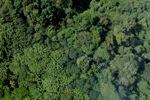 Borneo rainforest -- sabah_0761