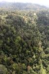 Borneo rainforest -- sabah_0763