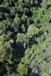 Borneo rainforest -- sabah_0764