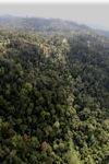 Borneo rainforest -- sabah_0765