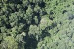 Borneo rainforest -- sabah_0766