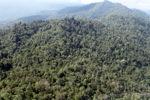Borneo rainforest -- sabah_0767